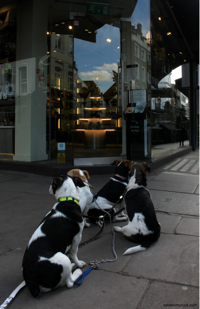 These little dogs were waiting in front of a luxourious chocolate shop nearby.
